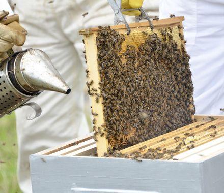 Création d'un rucher pédagogique